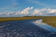 Sjö i Everglades Safari Park Arkivfoto