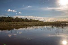 Sjö i Everglades Safari Park Arkivfoton
