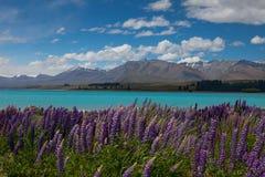 Sjö i Nya Zeeland med purpurfärgade blommor Arkivbild