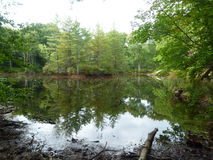 Sjö i Pike County, PA Royaltyfri Fotografi