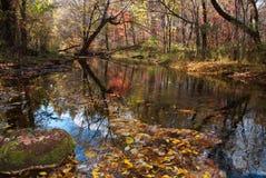 Sjö i skog arkivbild