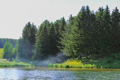Sjö i skogen i sommar royaltyfri bild