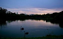 Sjö Ibirapuera Royaltyfria Bilder