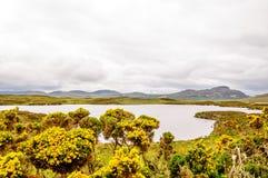 Sjö med att blomma kvaster i Skottland Royaltyfri Fotografi