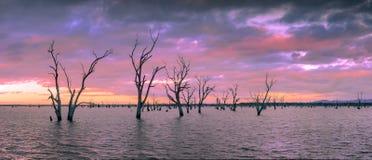 Sjö med döda träd - Grampians, Australien Arkivbilder