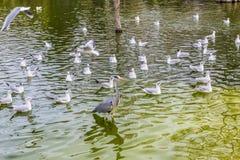 Sjö med en variation av fåglar och en häger royaltyfria bilder
