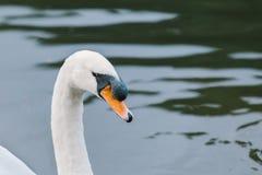 Sjö med en vit svan royaltyfri bild