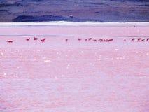 Sjö med flamingo Royaltyfri Fotografi