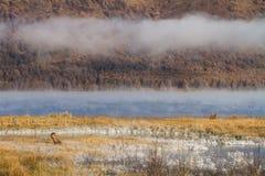 Sjö med mist i morgonen Arkivfoto