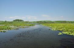 Sjö med näckrors i Donaudeltan, Rumänien Fotografering för Bildbyråer