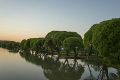 Sjö med träd i aftonsolnedgången Arkivfoton