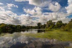 Sjö med träd och molnet Arkivfoto
