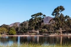 Sjö Murray Trees med det Cowles berget i San Diego Royaltyfri Fotografi