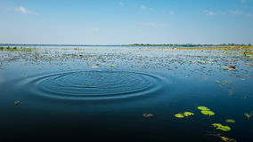 Sjö- och landvatten Royaltyfria Bilder