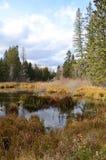 Sjö och skog på Duck Mountain Provincial Park, Manitoba Royaltyfri Bild