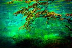 Sjö och träd i Jiuzhaigou Valley, Sichuan, Kina royaltyfri foto