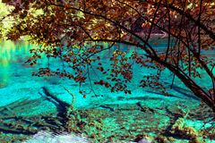 Sjö och träd i Jiuzhaigou Valley, Sichuan, Kina royaltyfri fotografi