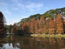 Sjö och träd med olika färger royaltyfria foton