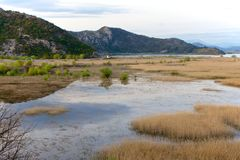 Sjö Skadar i Virpazar, Montenegro Royaltyfria Bilder
