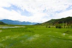 Sjö som täckas av gräs Fotografering för Bildbyråer