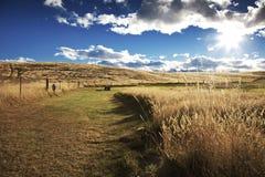Sjö Tekapo, Nya Zeeland Arkivfoto