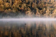 Sjö under höstsoluppgången med dimma och träd i bakgrunden arkivfoto