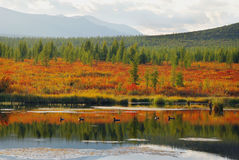 Sjöar av Altai Arkivbild