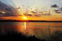 Sjöidyll på solnedgången med att flyga för fiskmåsar Arkivbild