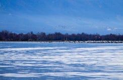 SjöKerkini fåglar Royaltyfri Bild