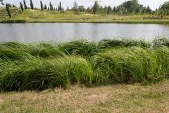 Sjökust med gräs och ängen Royaltyfri Fotografi