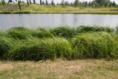 Sjökust med gräs och ängen Royaltyfria Bilder