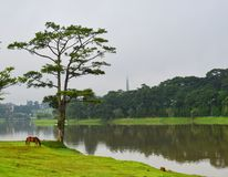 Sjölandskap i Dalat, Vietnam Royaltyfria Bilder