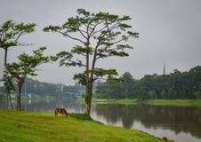 Sjölandskap i Dalat, Vietnam Arkivfoto