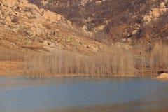Sjölandskap i vinter Arkivfoto