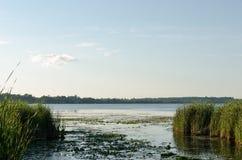 Sjölandskap och gräs med blå himmel Fotografering för Bildbyråer