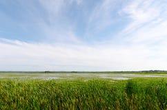Sjölandskap och gräs med blå himmel Arkivfoton