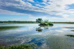Sjölandskap tidigt på morgonen med moln och ön med trädet i sjön Royaltyfri Bild