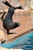 Sjölejon i en marin- show Arkivfoton