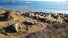 Sjölejon på stranden Arkivfoto