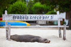 Sjölejon på stranden Royaltyfri Bild