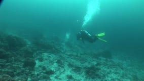 Sjölejon som dyker det undervattens- videopd Stilla havet för Galapagos öar lager videofilmer