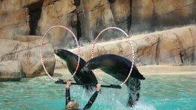 Sjölejon som utför på zoo Arkivfoto