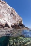 Sjölejon under och övrevatten som ser dig Royaltyfri Fotografi