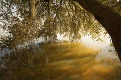 SjöMarion shoreline i Santee den nationella djurlivfristaden som är södra Fotografering för Bildbyråer