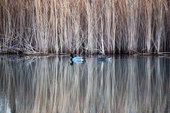 Sjön avspeglade gräs royaltyfri foto