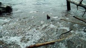 Sjön i Ryssland Royaltyfria Bilder