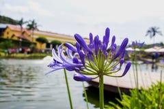 Sjön och blomman arkivbilder
