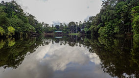 Sjön på Rainforestupptäcktmitten i Sepilok, Borneo Arkivbilder