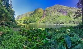 Sjön Poco gör Ribeira gör Ferreiro på den Azores ön av Flores Royaltyfria Bilder