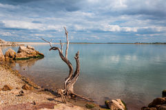 Sjön vaggar och trädet Royaltyfria Bilder